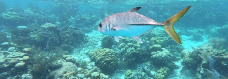 SeaStar Belize