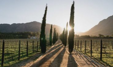 A weekend escape to Franschhoek